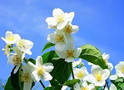 Meditare con i fiori di Bach