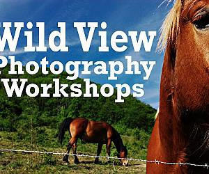 Evento Wild View Photography Workshop in Alto Mugello - Rifugio Alpino i Diacci