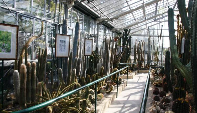 Labirinti all 39 orto botanico orto botanico giardino dei for Giardino orto botanico firenze
