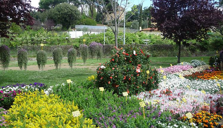 Mostra mercato di piante e fiori all 39 orticoltura giardino - Giardino dell orticoltura firenze ...
