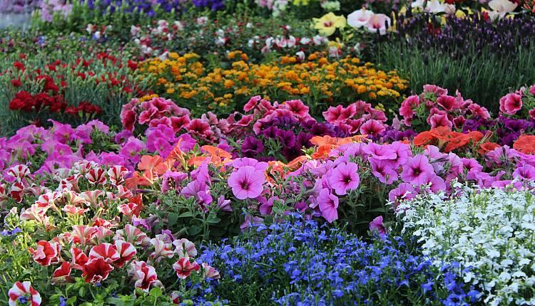 Mostra mercato primaverile di piante e fiori giardino dell for Fiori primaverili da giardino