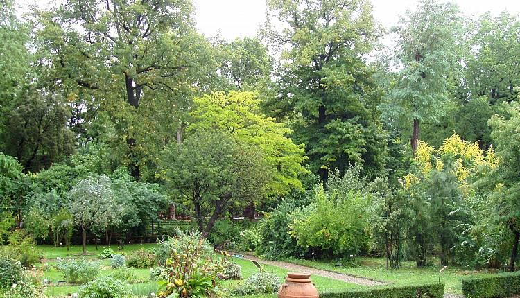 Orto botanico orto botanico giardino dei semplici eventi a firenze